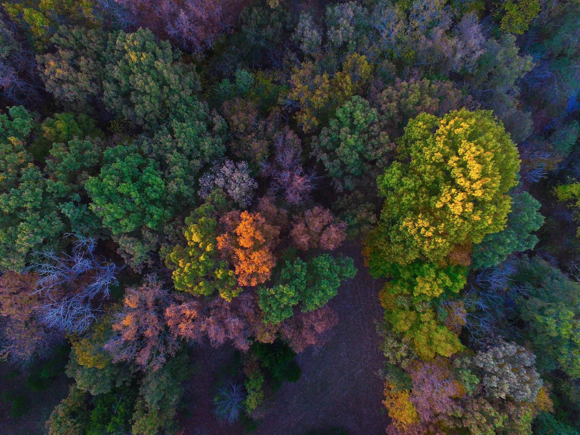 Fall Weekend at the farm autumn leaves and trees DJI Phantom 3 advanced video and Outfit of the day! By lauren lindmark on dailydoseofcharm.com lauren lindmark