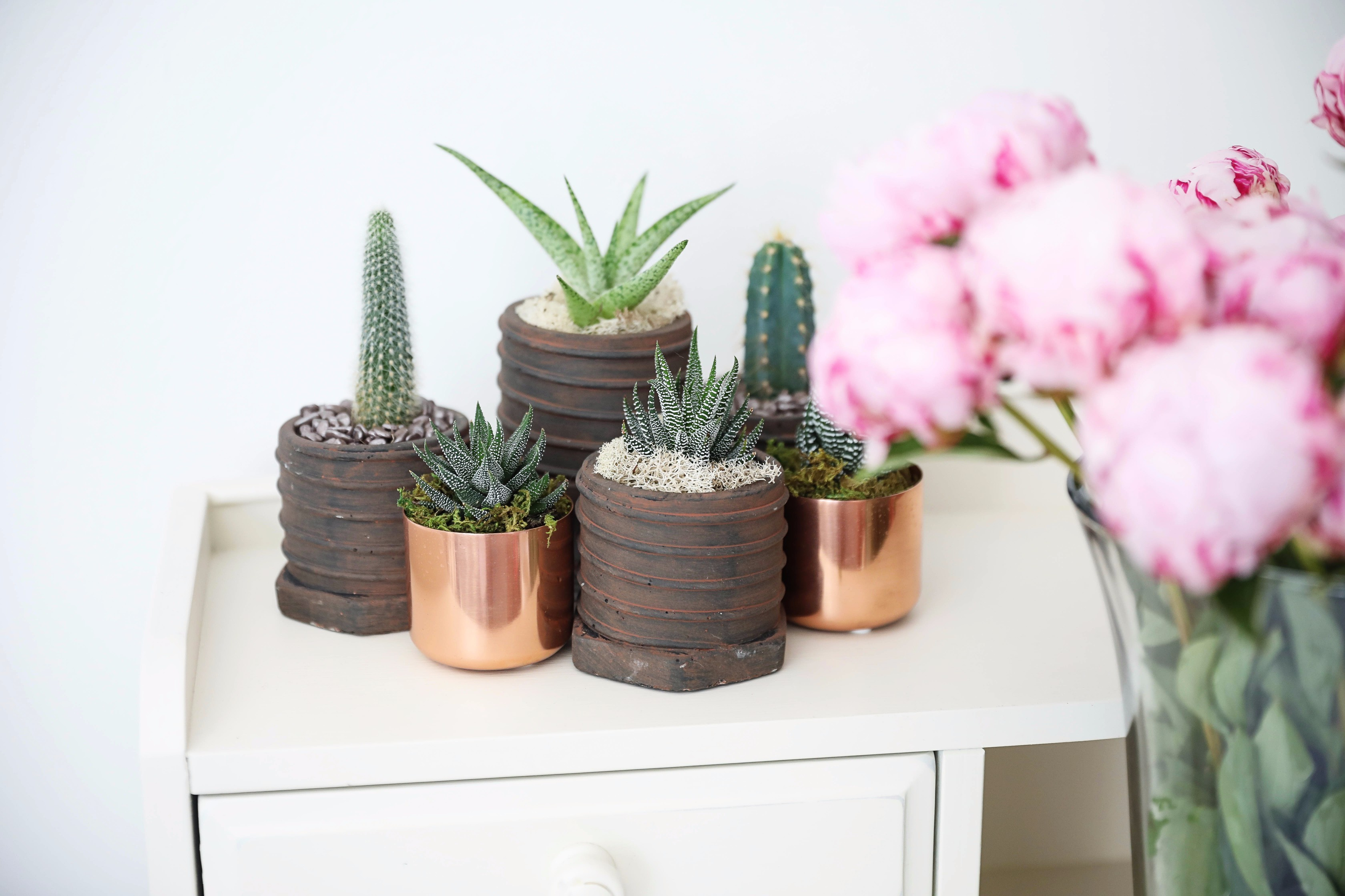 Pink peonies, cactus and succulents, and palm leaf calendar on June favorites by fashion and lifestyle blogger lauren lindmark on daily dose of charm