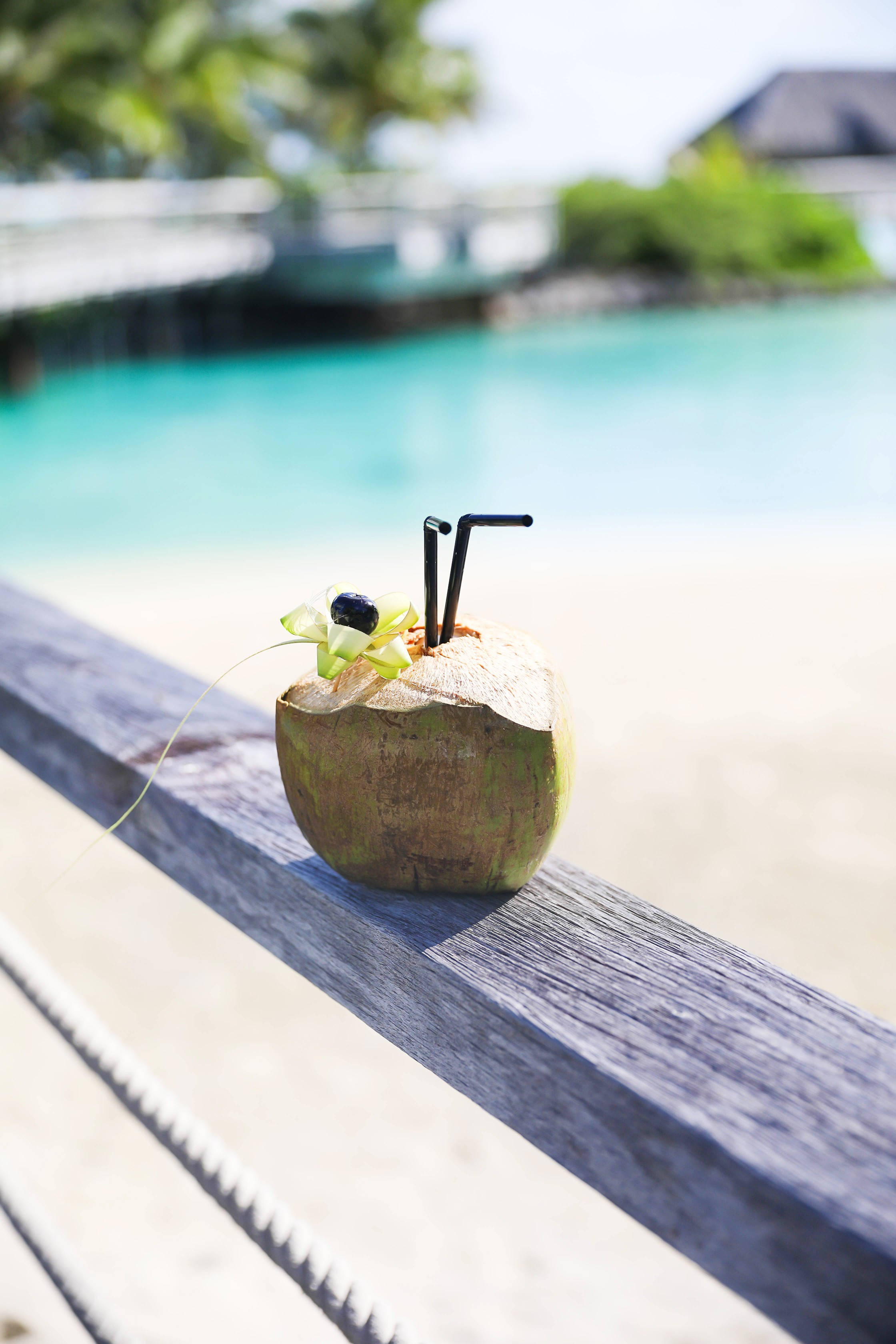 Coconut drink in bora bora, French Polynesia at the Intercontinental Hotel Thelasso! Cute beach photo and vacation photo inspiration! This black two piece high waisted long sleeve swimsuit bikini is my favorite! Details on travel blog Daily Dose of Charm by fashion blogger Lauren lindmark!